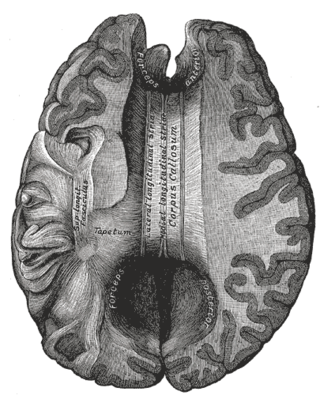 Gray's Anatomy (1918)/Public Domain