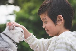 Sakura Image Inc for Shutterstock