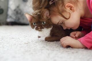Ekaterina Brusnika for Shutterstock