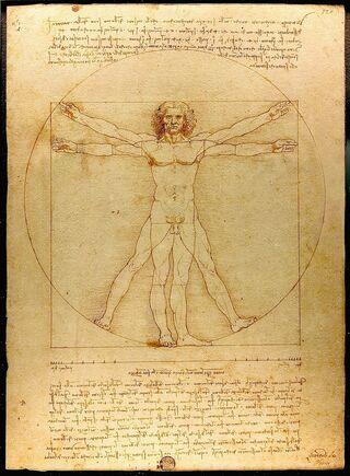 Da Vinci / Vitruvian Man / Wikimedia Commons Public Domain