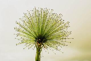 Degon/Pixabay