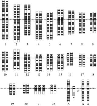 Human Genome Project. Public domain.