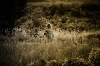 Source: Pursuit Photography/Creative Commons