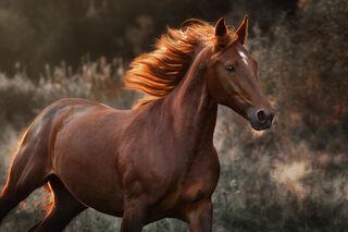 Дарья Ералева/AdobeStock