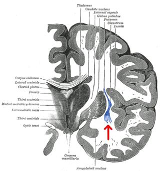 Gray's Anatomy/Wikimedia Commons