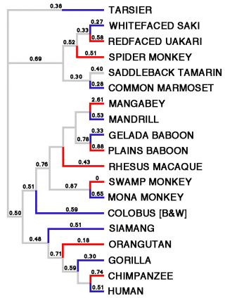 Figure redrawn from Wlasiuk et al. (2010)