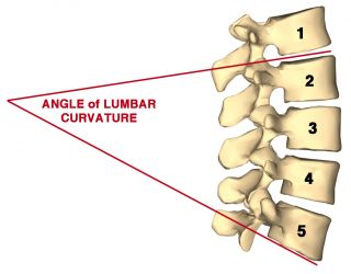 Adapted from an image of the lumbar vertebrae from Anatomography, Wikimedia Commons