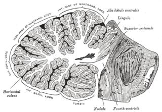 Wikimedia Common/Public Domain