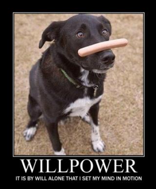 Funny Motivational Memes - Inspirational and Uplifting Quotes   Energy Motivation Meme