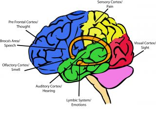 There are as many connections in a single cubic centimeter of brain tissue as th