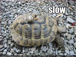 A turtle on a rocky beach with the word slow written above