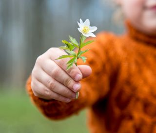 Young boy holding out a flower