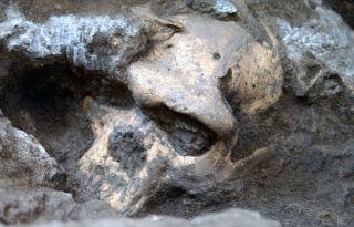 Dmanisi Skull #5