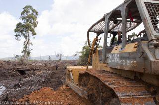 Bulldozing orangutan habitat for palm oil