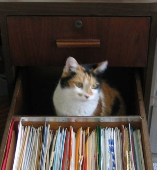 cat in a drawer