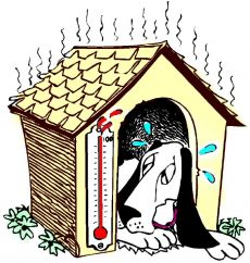 dog heat sweat temperature hyperthermia