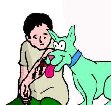 dog canine saliva wound healing lick