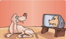dog canine television vision tv watch see perception