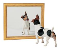 dog dogs canine canines mirror reflection consciousness monkey