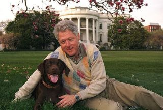 dog dogs canine canines pet pets Bill Clinton labrador retriever Buddy