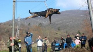 bulgaria dog spinning ritual trichane