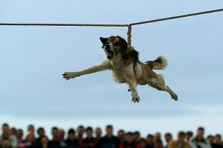 bulgarian dog spinning ritual trichane