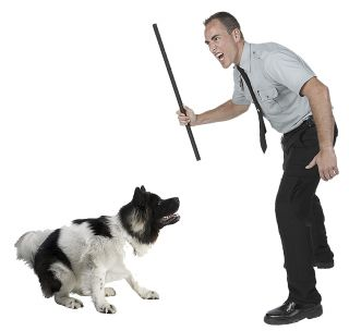 dog dogs canine canines training punishment