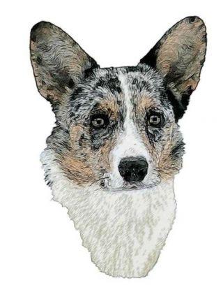dog ear bat corgi