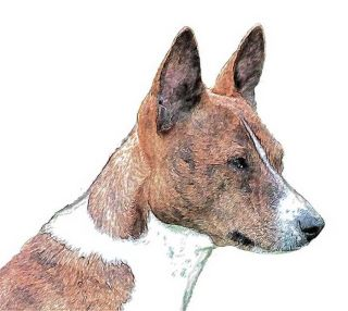 dog ear hooded cowl basenji