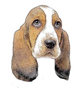 dog ear drop pendant basset hound