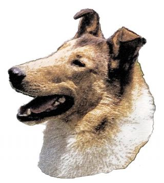 What Shape Is Your Dog's Ear? | Psychology Today