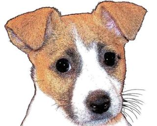 dog ear jack russell terrier button