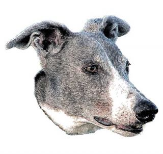 rose ear greyhound
