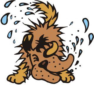 dog canine puppy wet shake pet animal water