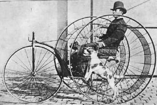 dog powered bicycle vehicle transportation pet environment