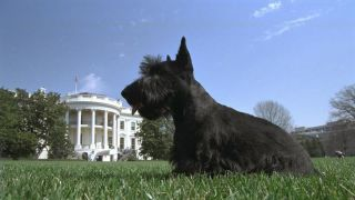 barney bush white house dog president