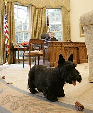 barney bush white house dog president oval office