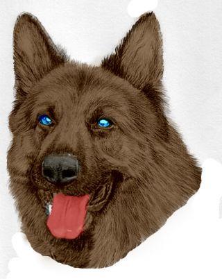 happy dog emotion pet communication interpretation