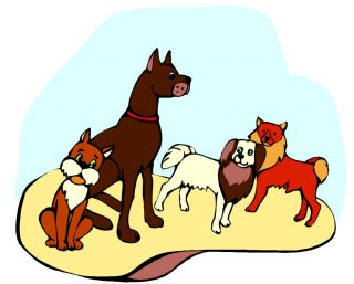 dog breeds variability shape type size canine species non-dogs