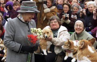 queen elizabeth corgi club winnipeg canada manitoba dog pet