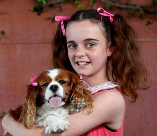 dog pet canine look alike girl cavalier king charles spaniel similar resemble