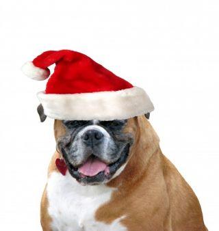 dog pet canine christmas xmas elf costume santa claus