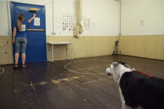 dog pet canine attention capture person bond human animal border collie