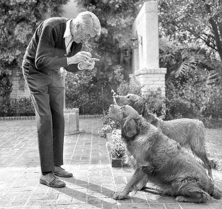 jimmy james stewart dog canine pet golden retriever play ball