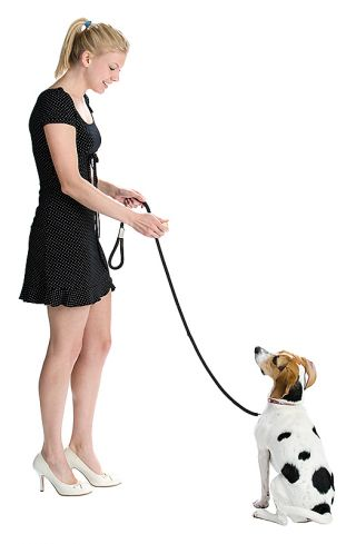 dog canine pet training obedience learning performance response compliance