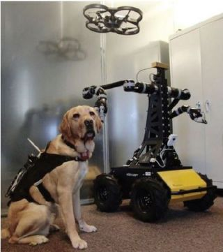 dog canine pet robot cyborg cybernetic enhanced working sidekick sensors