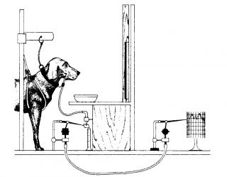Pavlov's experimental appartus diagrammed