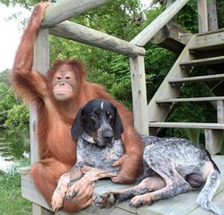 Orang & dog