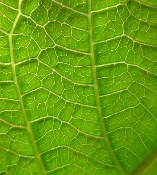 The structure of a leaf