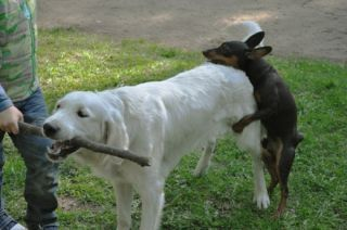 Why Dogs Hump | Psychology Today